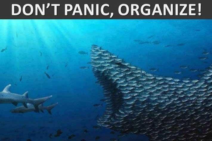 Dont-Panic-Organize-Funny-Shark